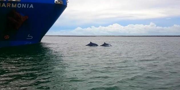 Golfinhos-na-praia-do-cassino