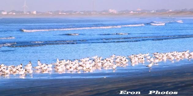 Boa tarde na maior Praia do Mundo