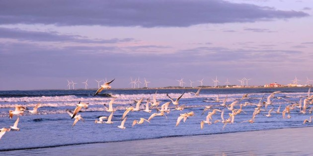 Gaivotas na Praia do Cassino