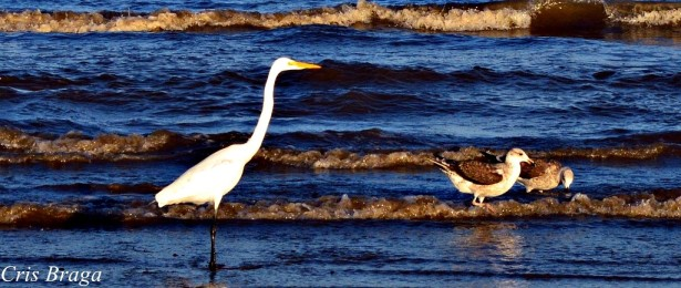 Aves no mar do cassino
