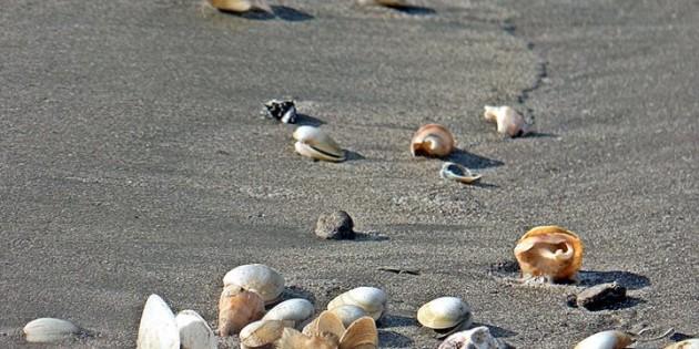 Conchas Em nossa Praia do Cassino no inverno