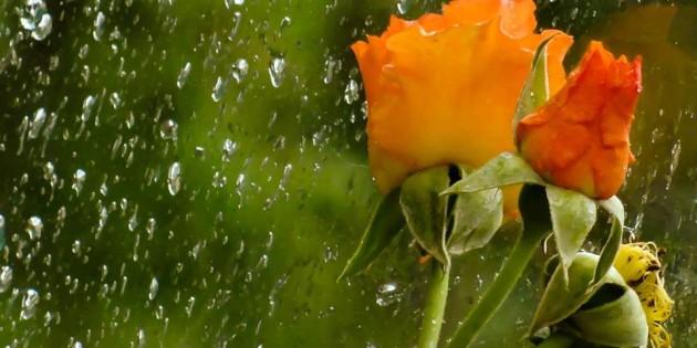 Dia de chuva tambem traz belezas