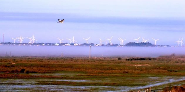 Campos da barra com neblina baixa, visto da via 9