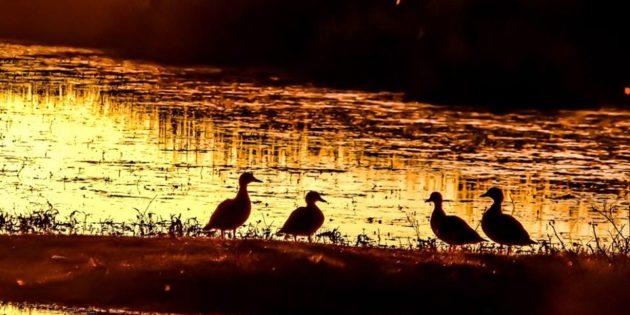 Passaros em Lago no Balneario Cassino