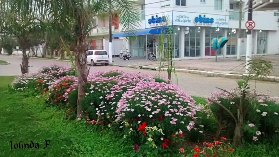 Flores da Avenida Rio Grande Balneario Cassino