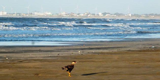 Primeiras horas da manha de hoje na praia