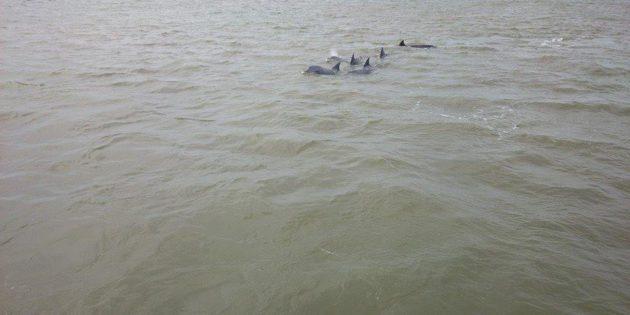Familia Golfinhos Praia Cassino