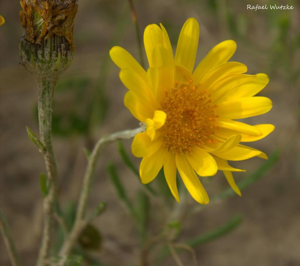 Flor de Praia - balneario Cassino